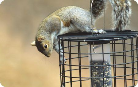 Dealing with Critters, EcoClean, Eco Clean, Seed Tube Feeder, Feeders, Aspects, On-Guard Cage, On Guard, Squirrel proof, resistant, Holscher, Hardware, Fox Squirrel, Squirrels