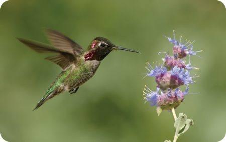 Summer Wild Birds Unlimited Wild Birds Unlimited
