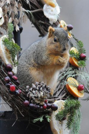 blog-wreath01-Squirrel-on-Wreath-121313