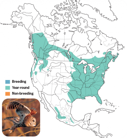Barred Owl, Range Map, Wild Birds Unlimited, WBU